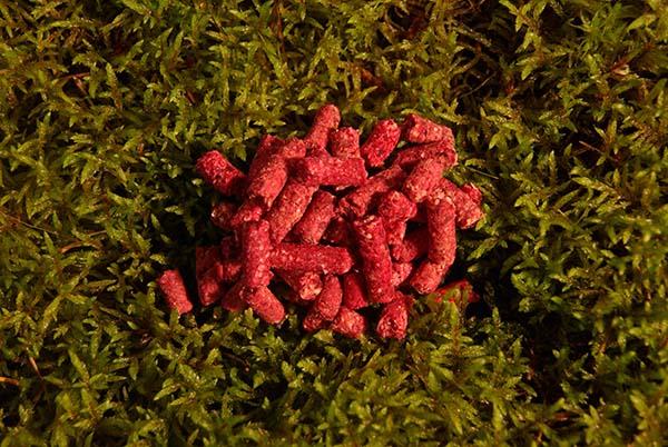 03008 Pellet Erdberry